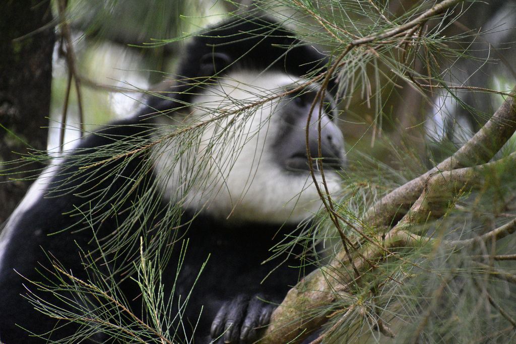 Amora Gedel Park Awasa, The World's Best Photos of awassa and colobus - Flickr Hive Mind