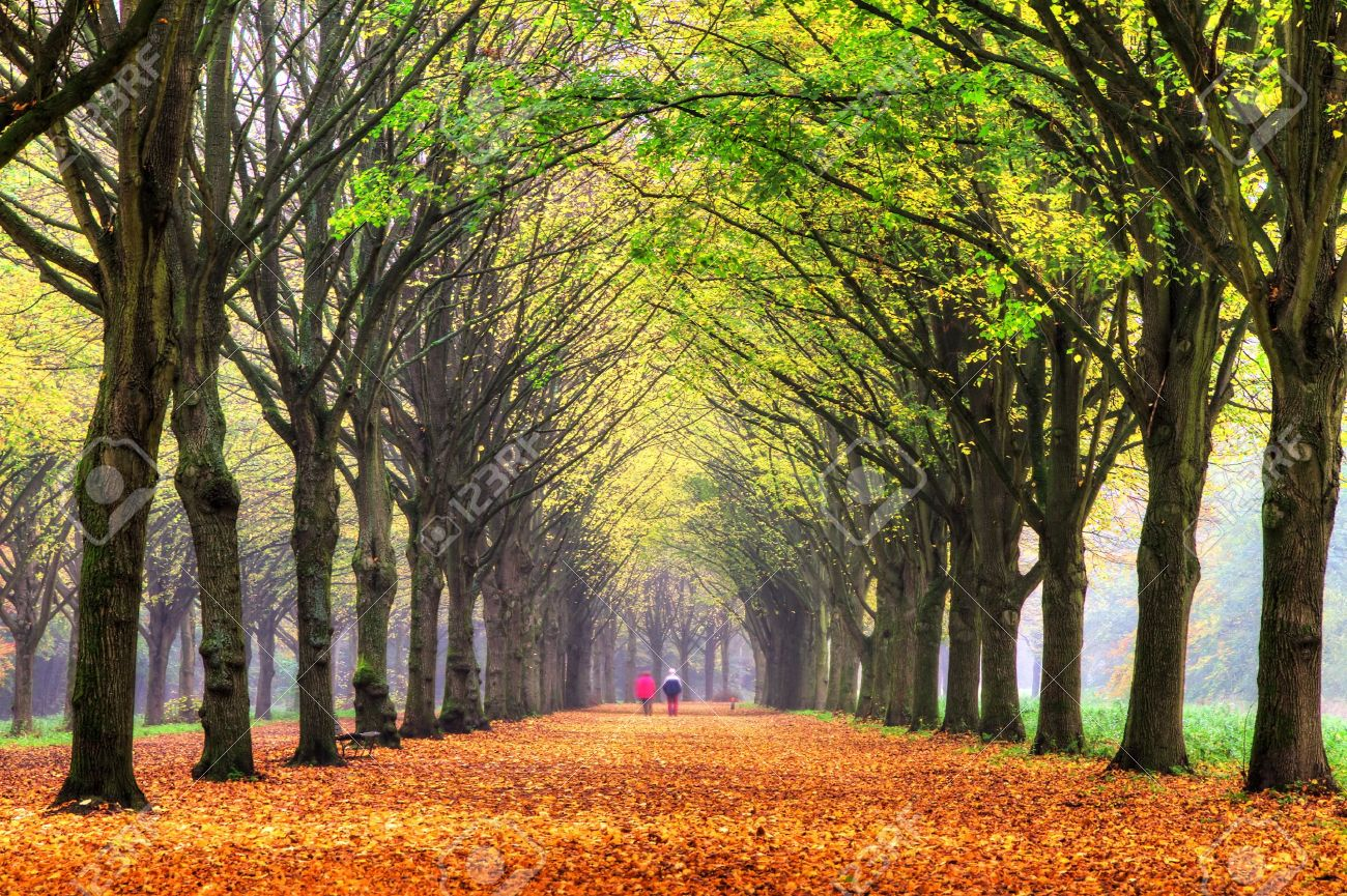 Amsterdamse Bos Amsterdam, Elderly Couple Walking In The Forest In Autumn In Het Amsterdamse ...