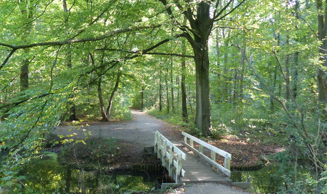 Amsterdamse Bos Amsterdam, Amsterdamse Bos | Man-made forest full of activities | Conscious ...