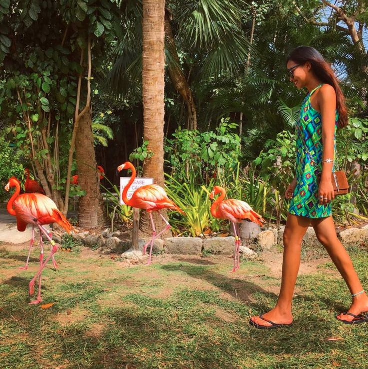 Ardastra Gardens, Zoo, and Conservation Centre New Providence and Paradise Islands, 8 best Ardastra Gardens, Zoo and Conservation Centre images on ...