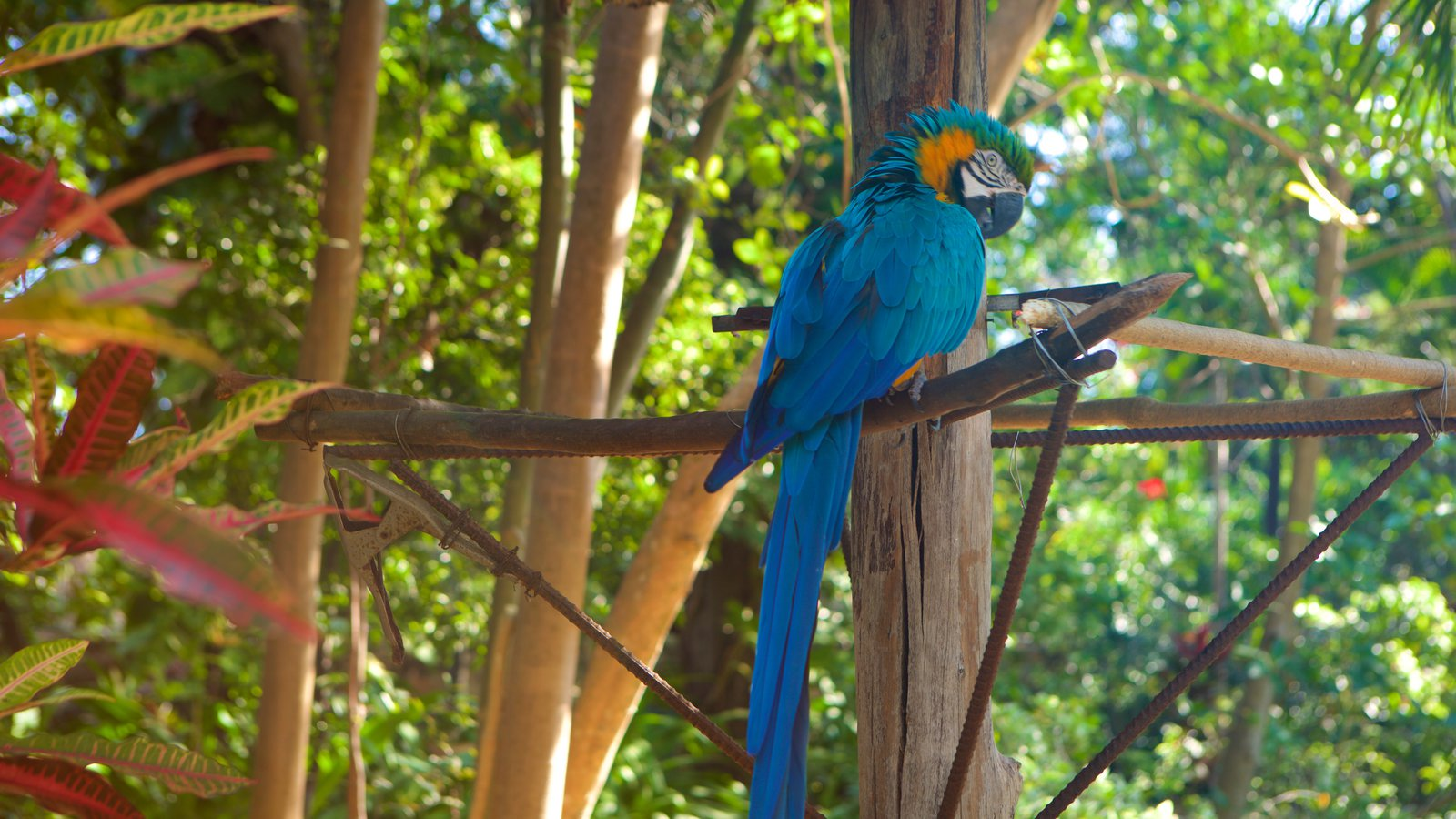 Ardastra Gardens, Zoo & Conservation Center Nassau, Bird Pictures: View Images of Ardastra Gardens, Zoo and ...