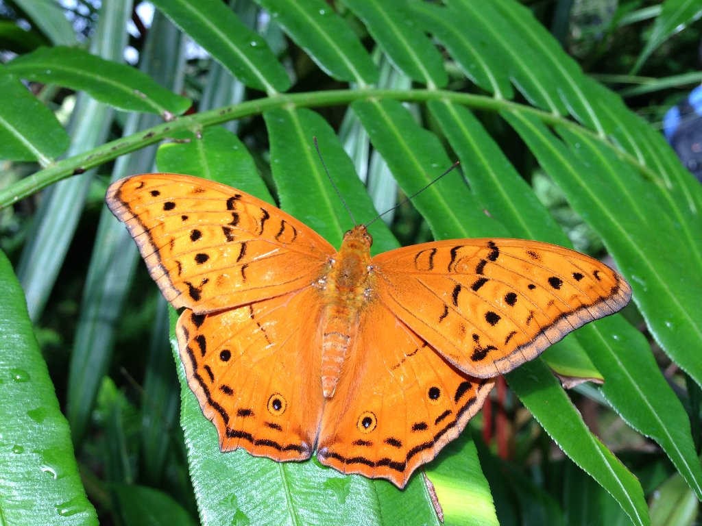 Australian Butterfly Sanctuary Kuranda, Coach to Kuranda | Rainforestation Nature Park | Butterfly ...