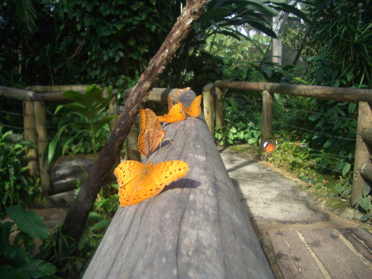 Australian Butterfly Sanctuary Kuranda, Cairns Attractions | Australian Butterfly Sanctuary