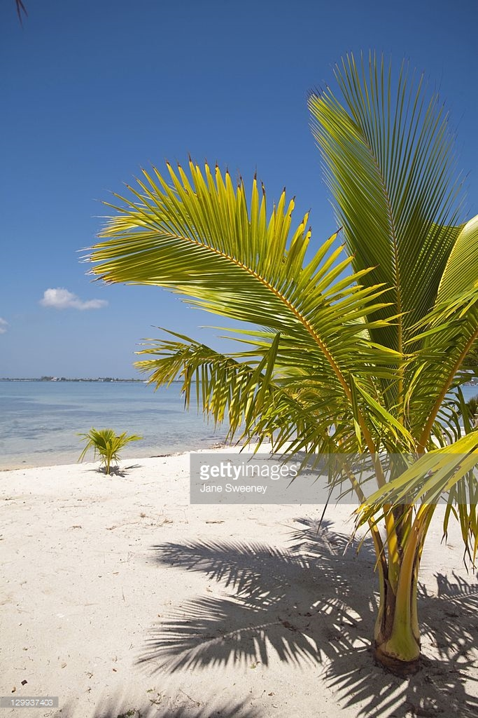 Bando Beach Utila, Bando Beach Utila Bay Islands Honduras Stock Photo | Getty Images