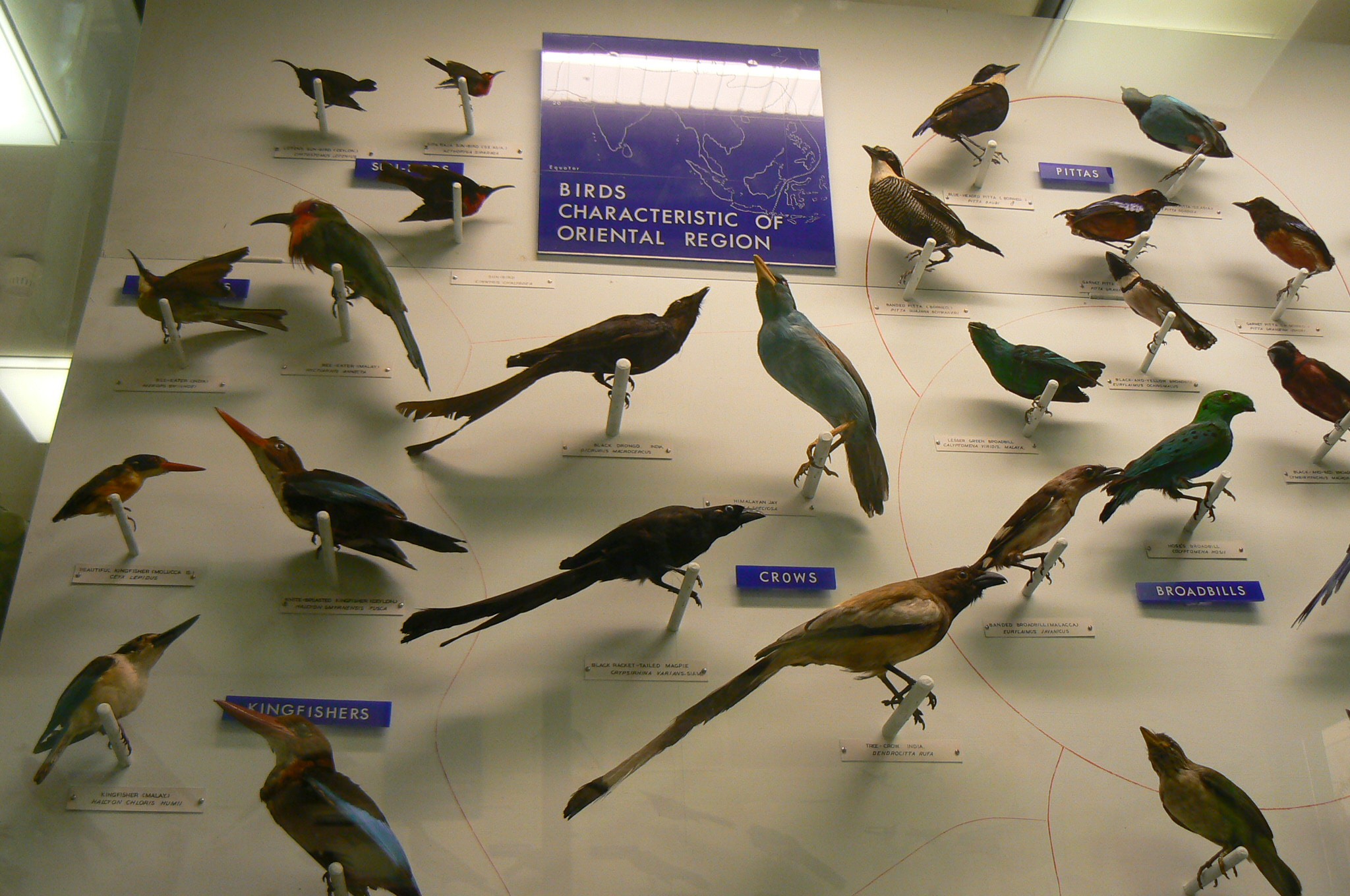 Bell Pettigrew Museum of Natural History Fife and Angus, Bird display at the Bell Pettigrew Museum | Museum Collections Blog
