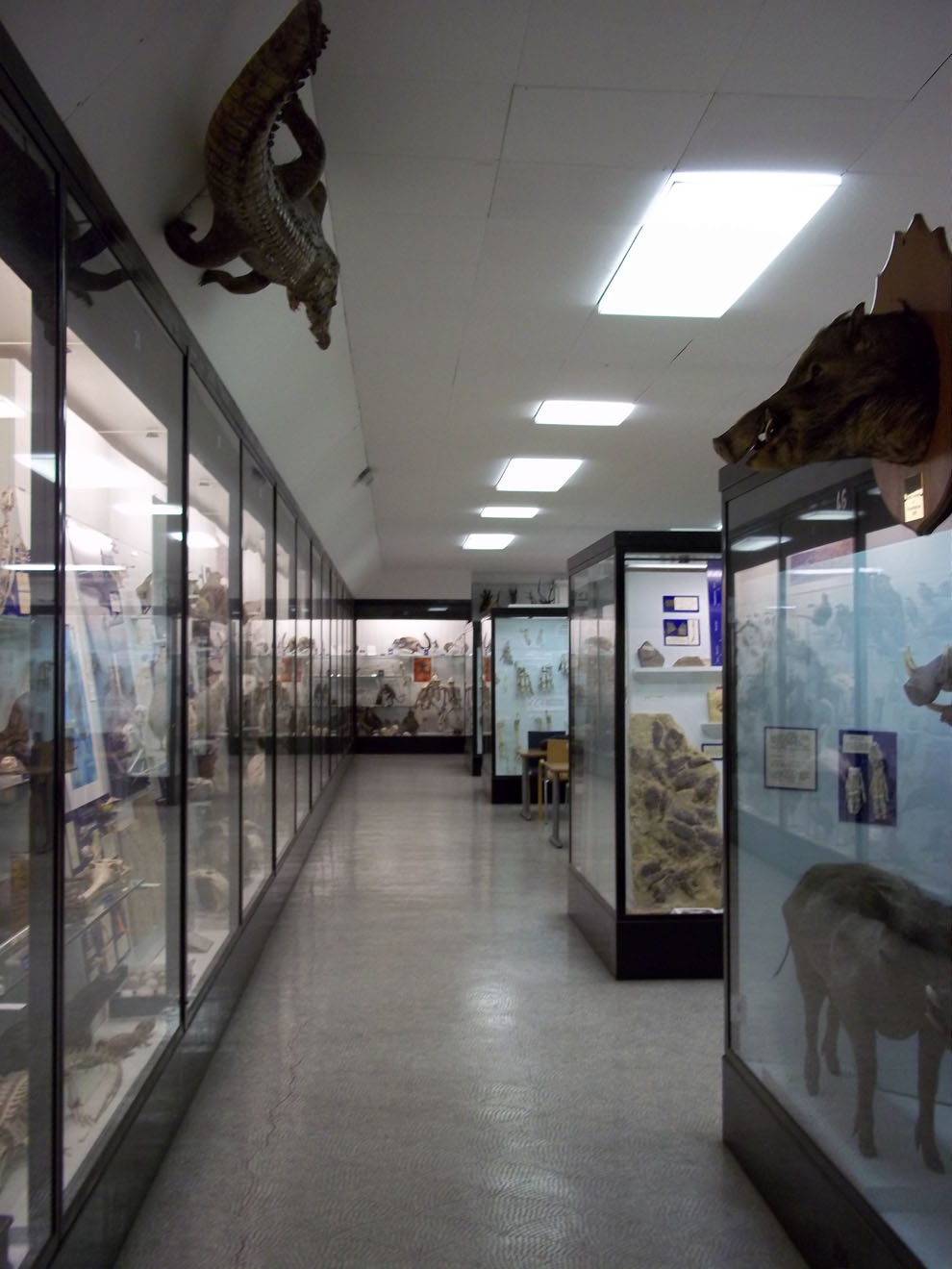 Bell Pettigrew Museum of Natural History Fife and Angus, Five of St Andrews' Hidden Gems | St Andrews