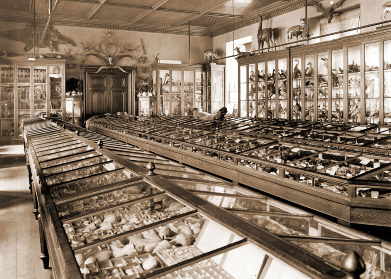 Bell Pettigrew Museum of Natural History Fife and Angus, Lighting the Past: The St Andrews Collection | Echoes from the Vault