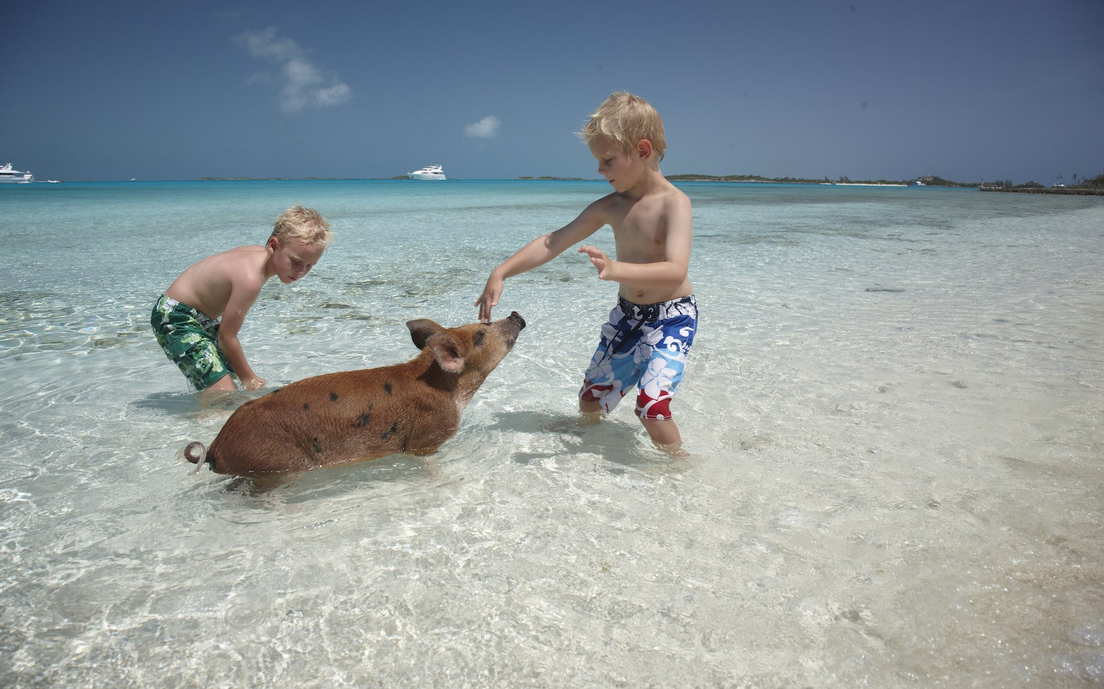 Big Major's Cay The Exumas, Everything you want to know about swimming with pigs in the ...