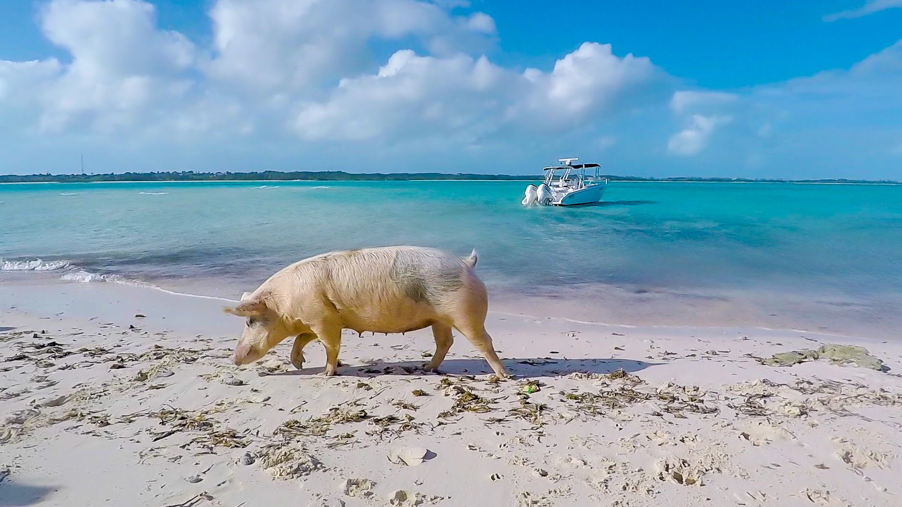 Big Major's Cay The Exumas, Swimming with the pigs at Big Major Cay in the Exumas - YouTube