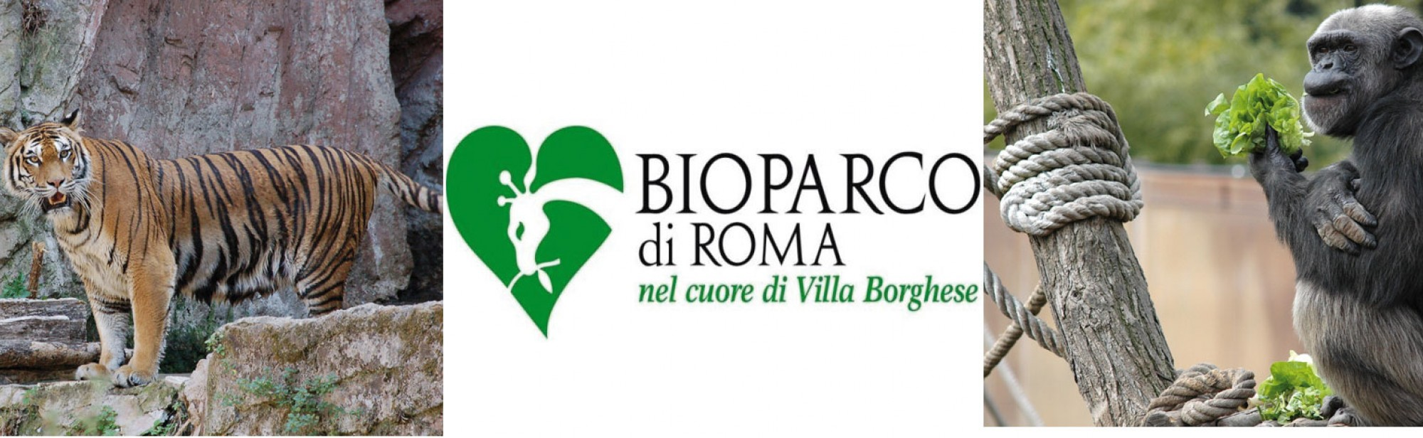 Bioparco Rome, Accommodations area Bioparco Rome