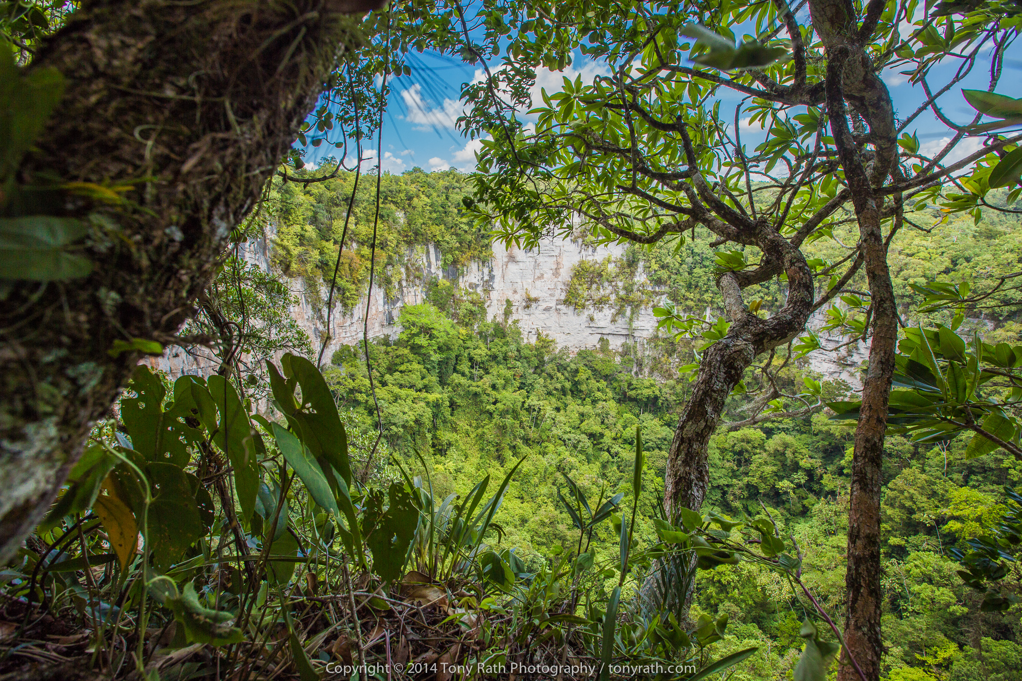 Bladen Nature Reserve The Deep South, Belize is at War by Tony Rath - Exposure
