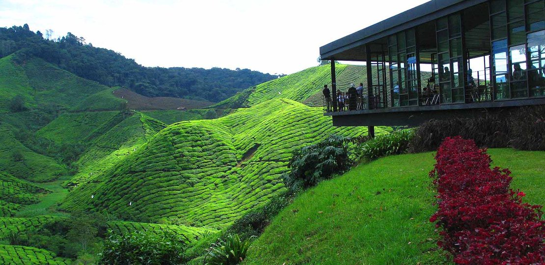 Boh Tea Estate Cameron Highlands, Top 11 Road Trip Routes In Malaysia That Are Totally Worth The Drive