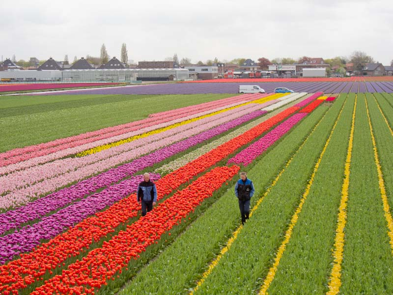 Bollenstreekroute Day Trips from Amsterdam, Holland-Cycling.com - Keukenhof Cycle Route