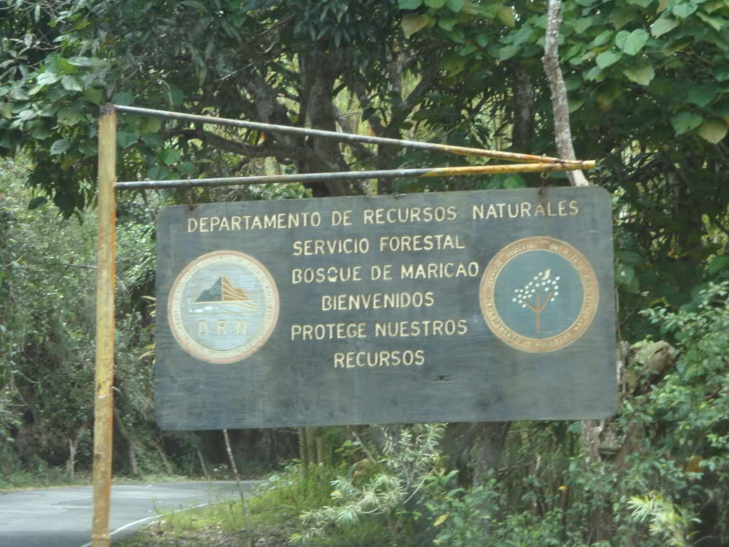 Bosque Estatal de Maricao Maricao, Recently another poblation of parrots where move to this forrest ...