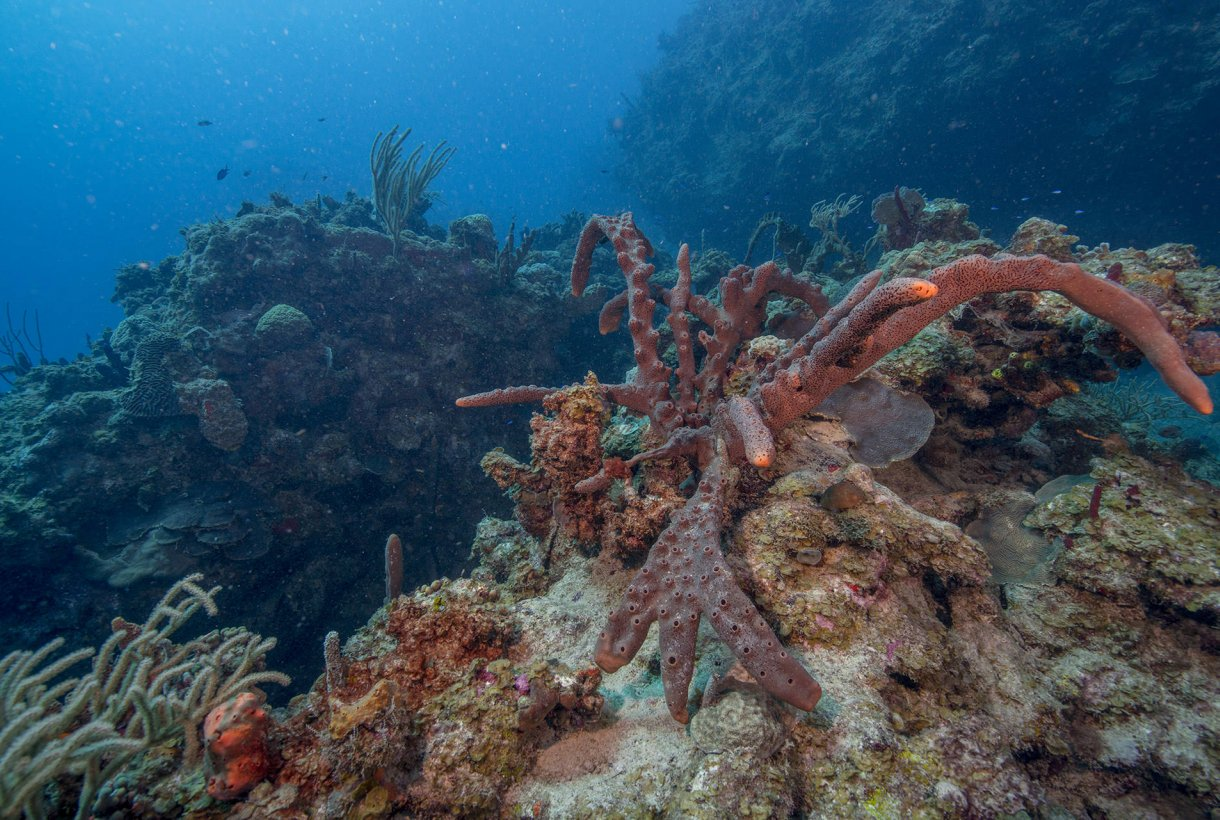 Buck Island Reef National Monument Christiansted, Buck Island Reef | National Park Foundation