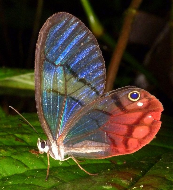 Butterfly and Insect Museum Honduras' Caribbean Coast, 134 best Butterflies and Insects images on Pinterest | Butterflies ...