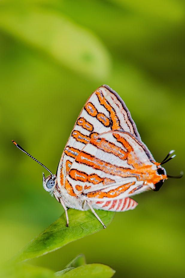 Butterfly and Insect Museum Honduras' Caribbean Coast, 812 best Butterflies & Insects images on Pinterest | Beautiful ...
