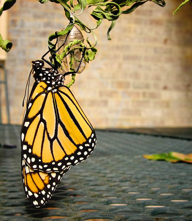 Butterfly and Insect Museum Honduras' Caribbean Coast, 379 best Butterflies & Butterfly Photos images on Pinterest ...