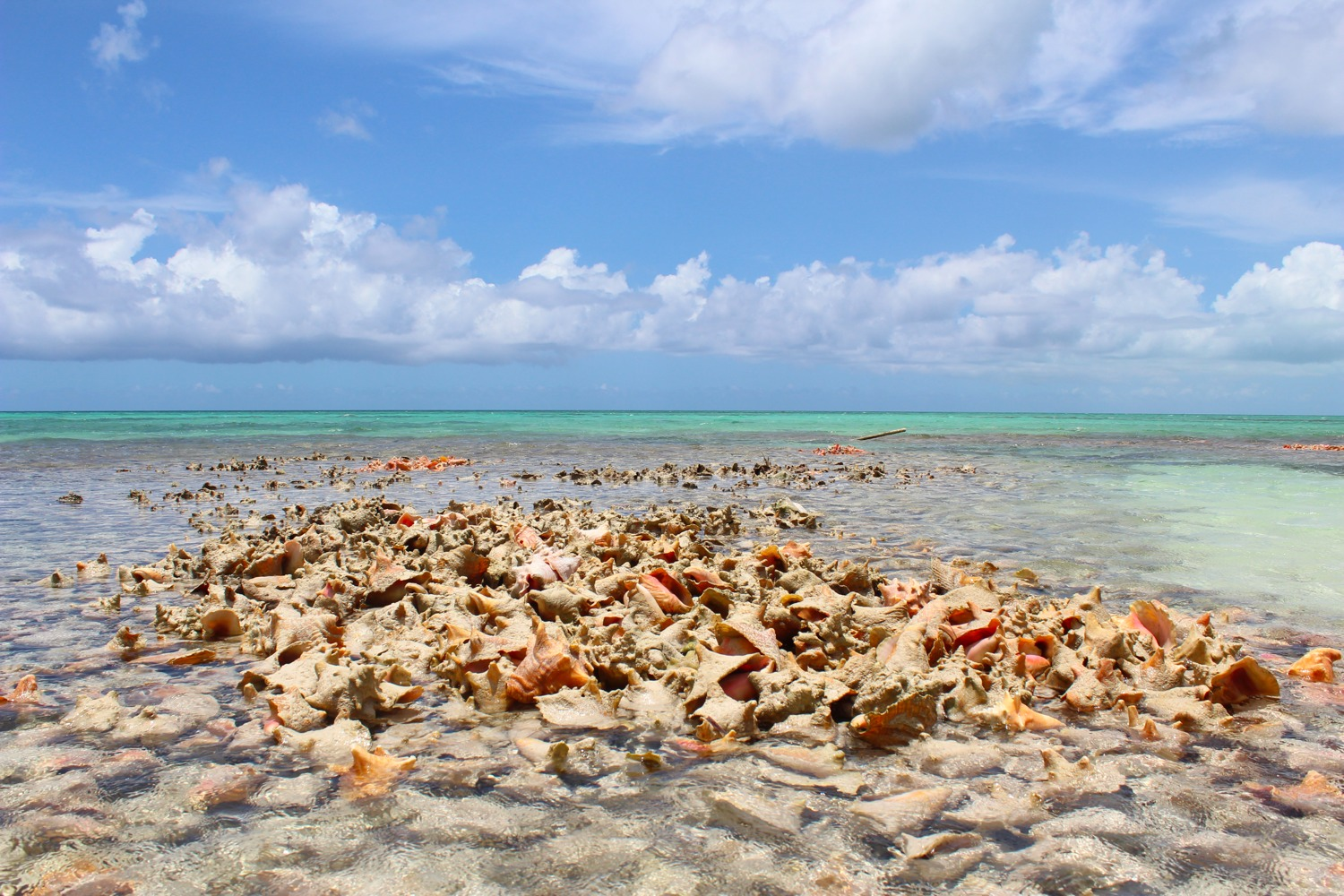 Caicos Conch Farm Providenciales, Globetrotting: The Caicos Conch Farm | Globetrotting Stiletto