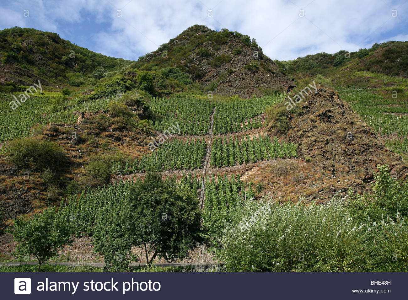 Calmont The Rhineland, steepest vineyards in Europe, Bremm-Calmont, the Moselle valley ...