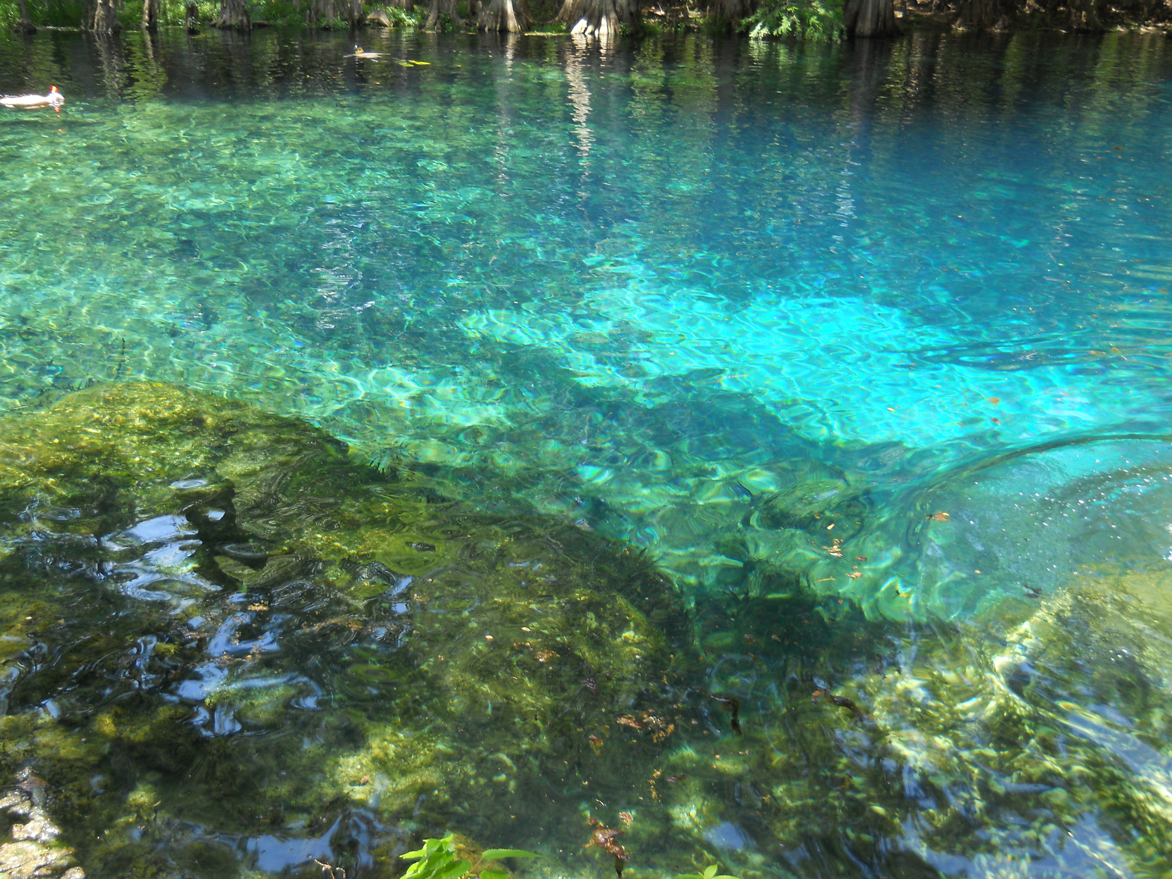Sanibel–Captiva Conservation Foundation The Lower Gulf Coast, Manatee Springs State Park in Chiefland, FLORIDA | Florida ...