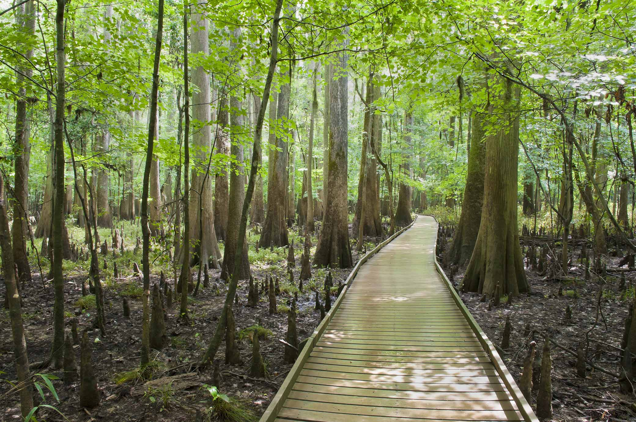 Columbia Forest Reserve The Deep South, Top 10 Attractions in Columbia, SC - Choice Hotels