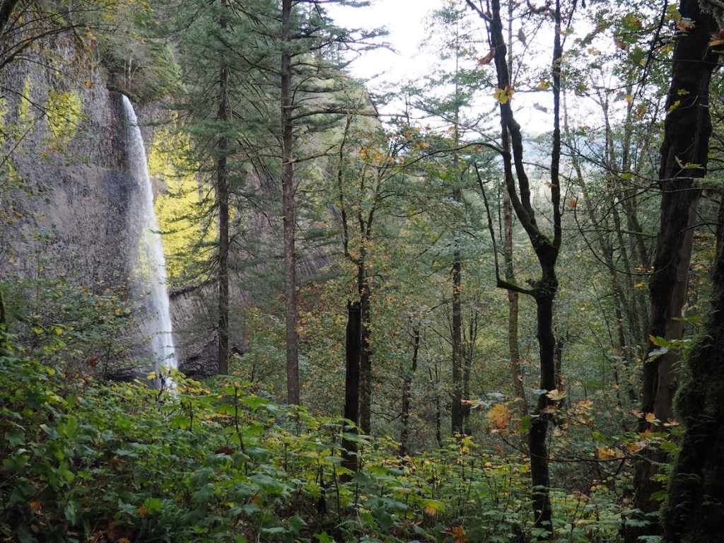 Columbia Forest Reserve The Deep South, Columbia River Gorge Waterfalls - Multnomah Day Trip | Siempre Sydney