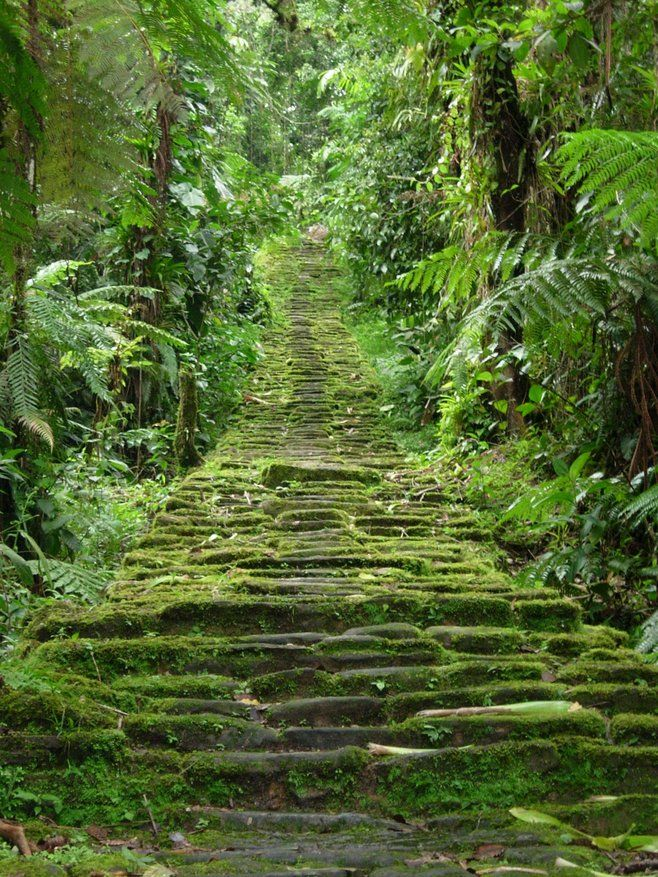 Columbia Forest Reserve The Deep South, 25+ beautiful Columbia ideas on Pinterest | Where is colombia ...