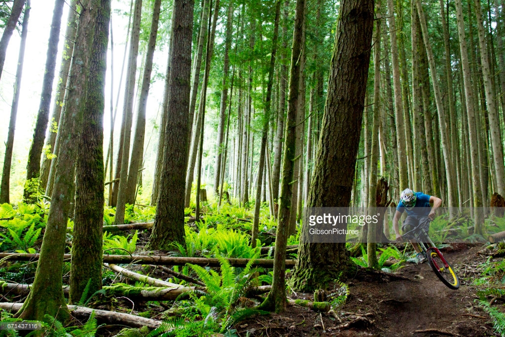 Columbia Forest Reserve The Deep South, A Male Mountain Biker Rides A Small Jump On A Downhill Trail In A ...