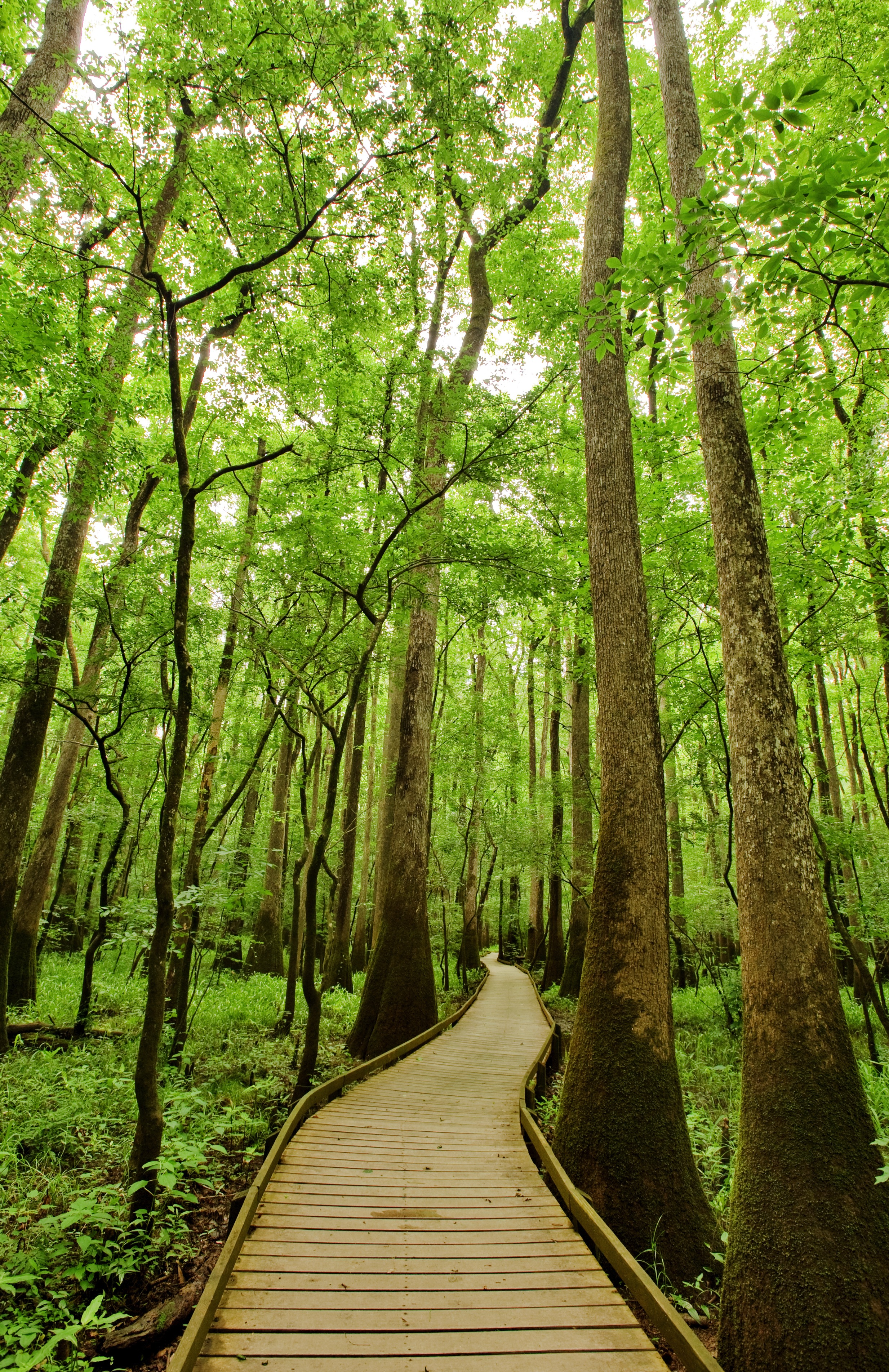 Columbia Forest Reserve The Deep South, Congaree National Park in South Carolina has an astonishing amount ...