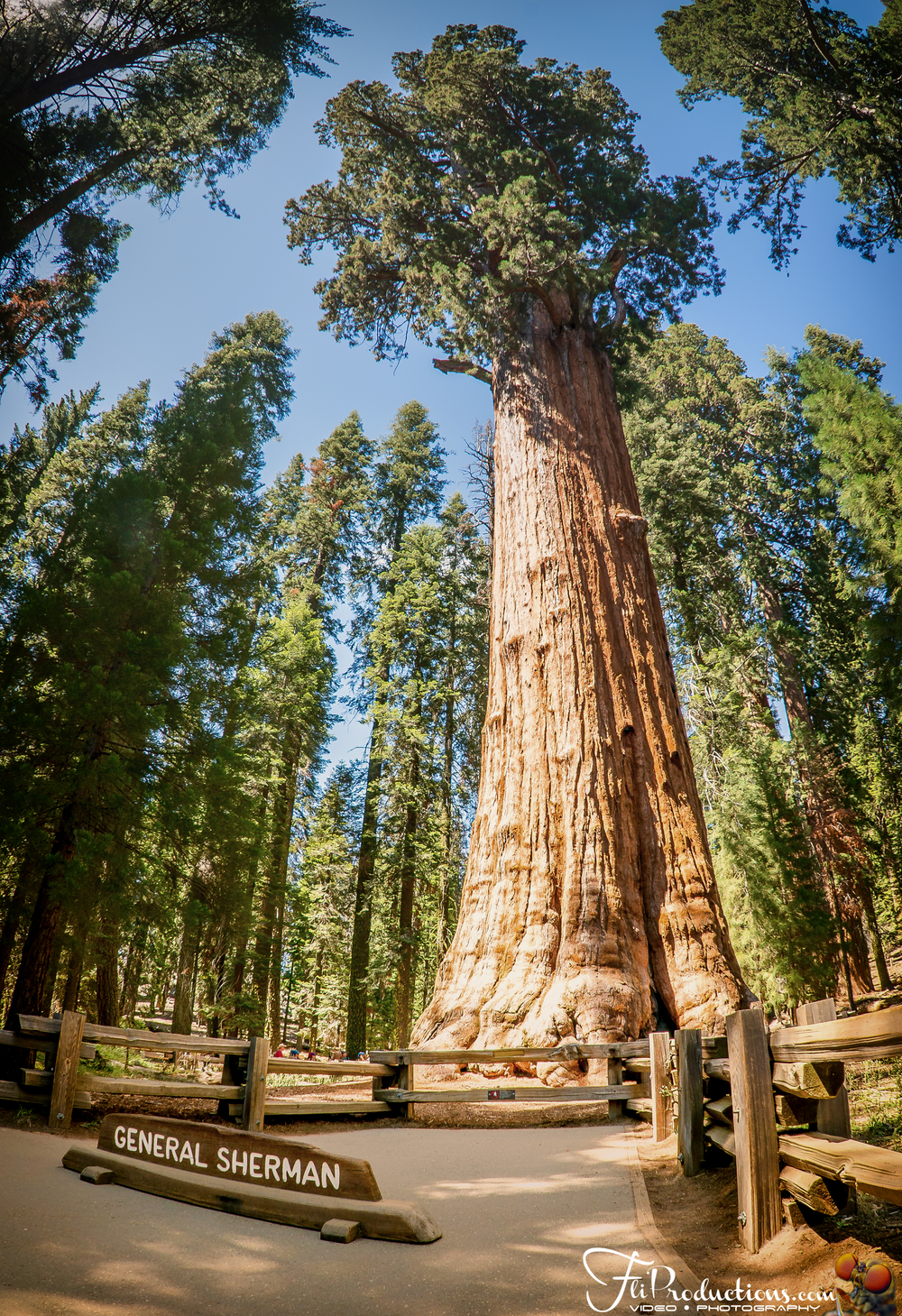 Columbine Sequoia and Kings Canyon National Parks, General Sherman, Moro Rock, Tall Tree - Sequoia National Park ...