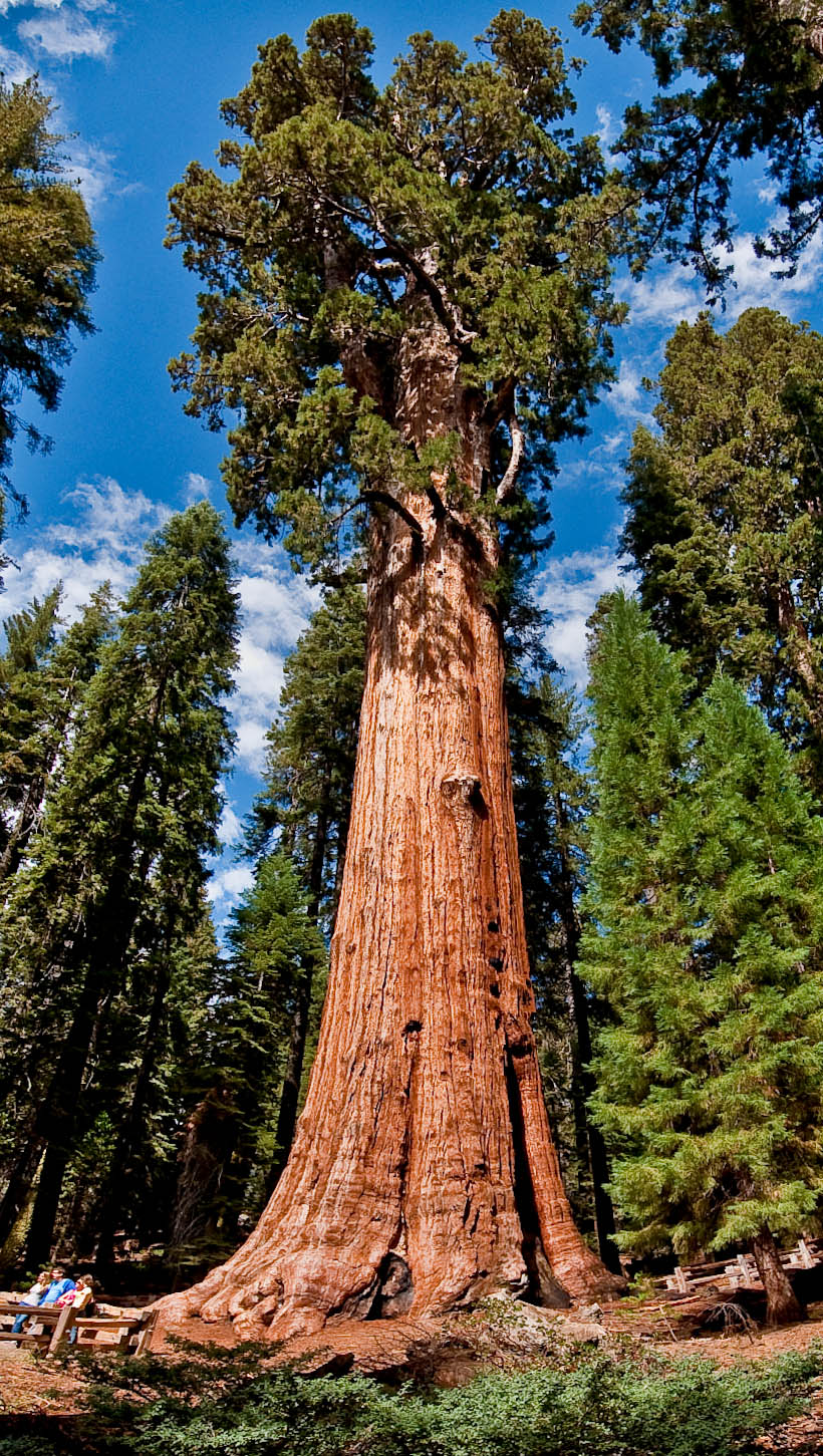 Columbine Sequoia and Kings Canyon National Parks, General Sherman Tree – The World's Largest Tree – Tourism Attraction