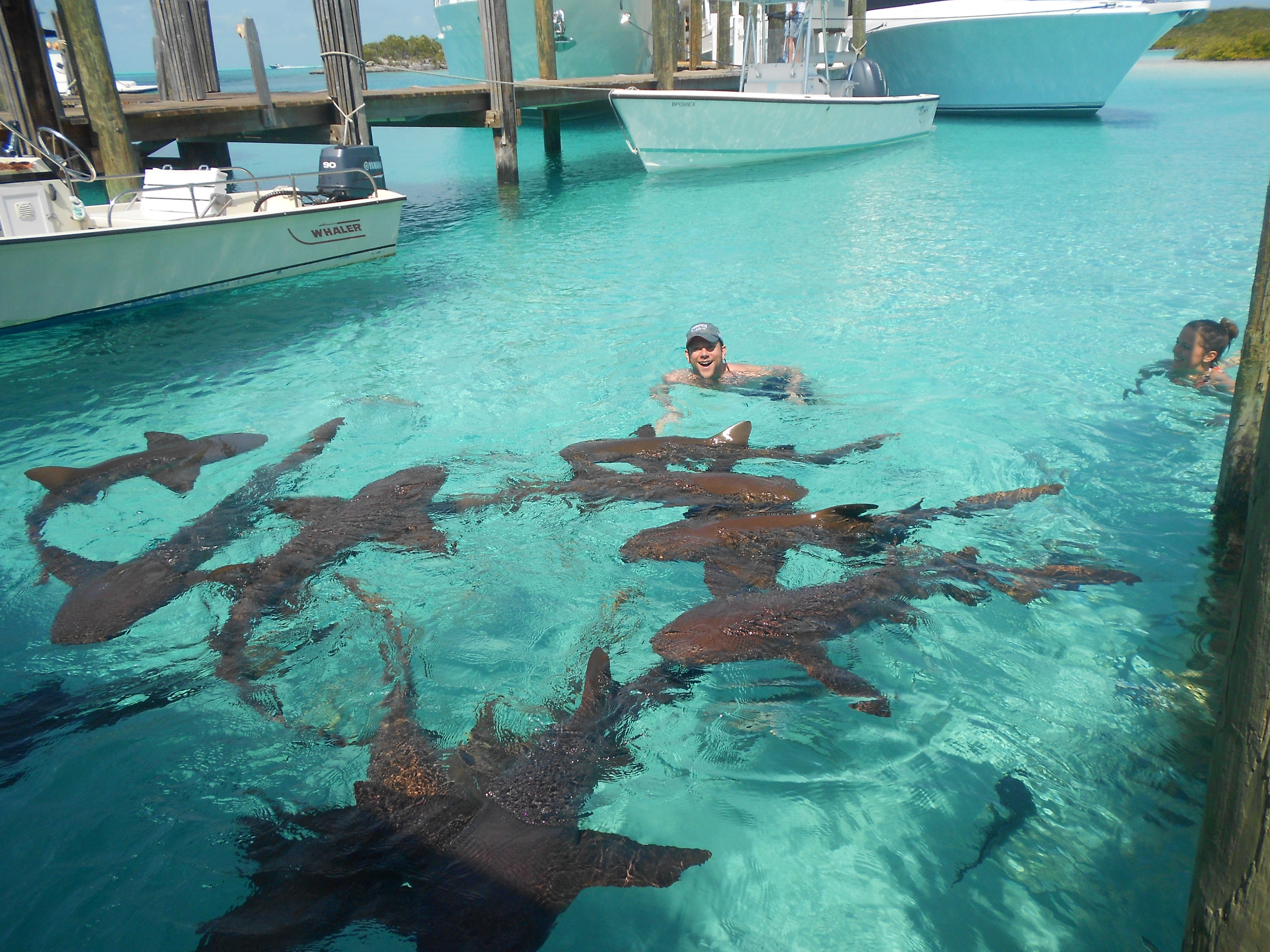 Compass Cay The Exumas, Exuma - Swimming with Sharks Something that happens for real at ...