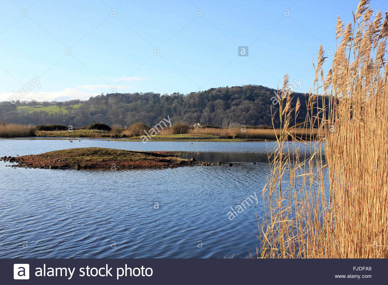 Conwy Nature Reserve Llandudno Junction, Winter View Of Lake and Reedbed At Conwy RSPB Nature Reserve ...