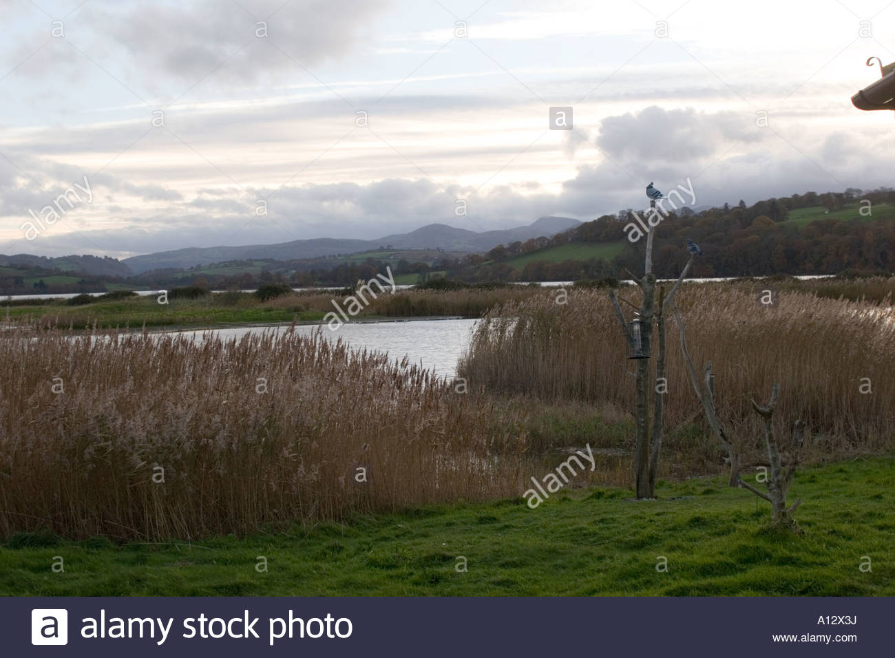 Conwy Nature Reserve Llandudno Junction, Conwy, North Wales RSPB reserve Stock Photo, Royalty Free Image ...