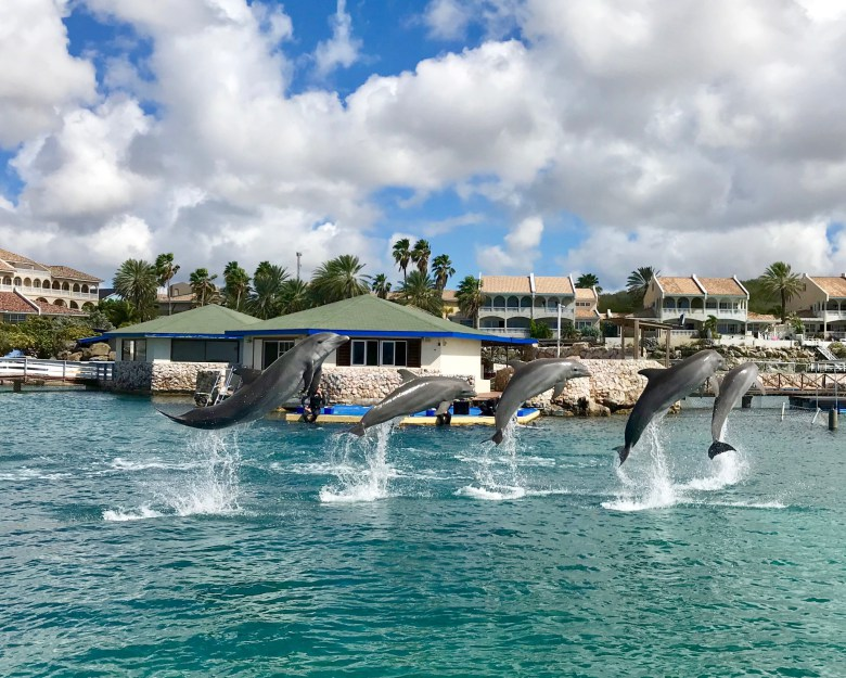 Curaçao Sea Aquarium Southeast of Willemstad, Best Things to Do in Curacao with Kids - Growing Up Bilingual