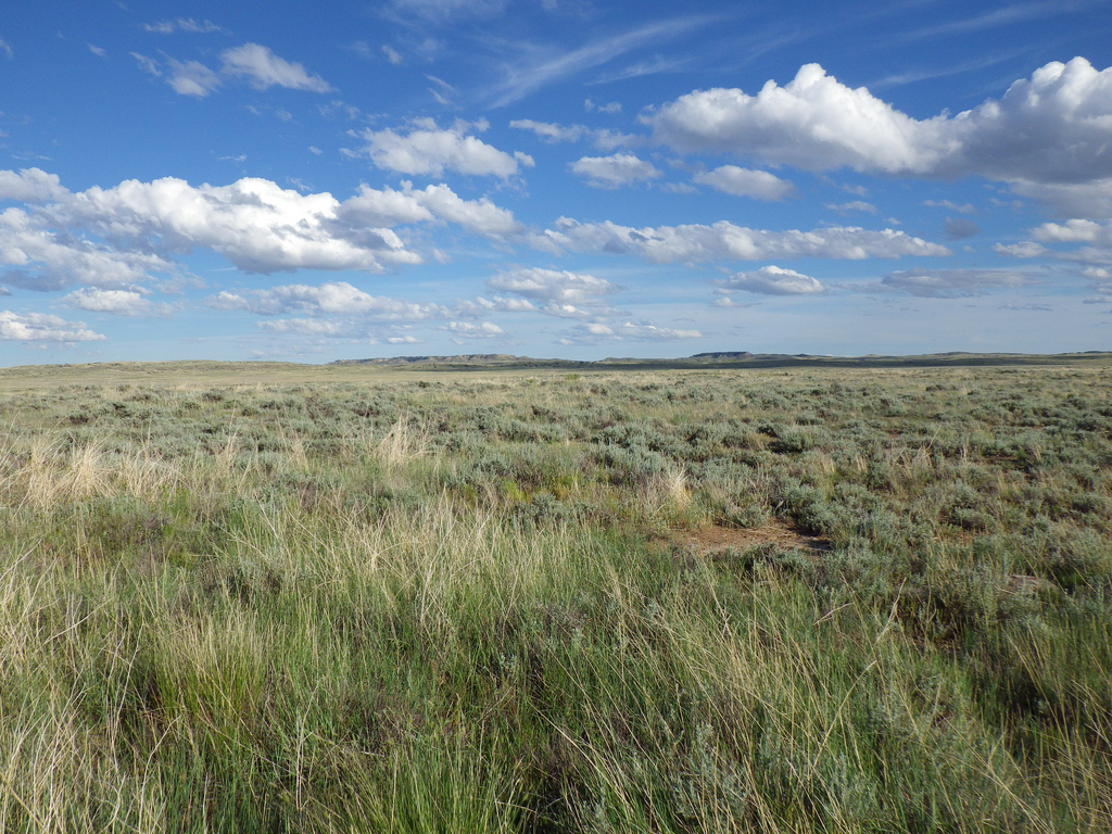 Custer National Forest, Sioux Ranger District Billings, Little Big Horn, and the Montana Plains, UL Bend National Wildlife Refuge, Billings, Little Big Horn, and ...