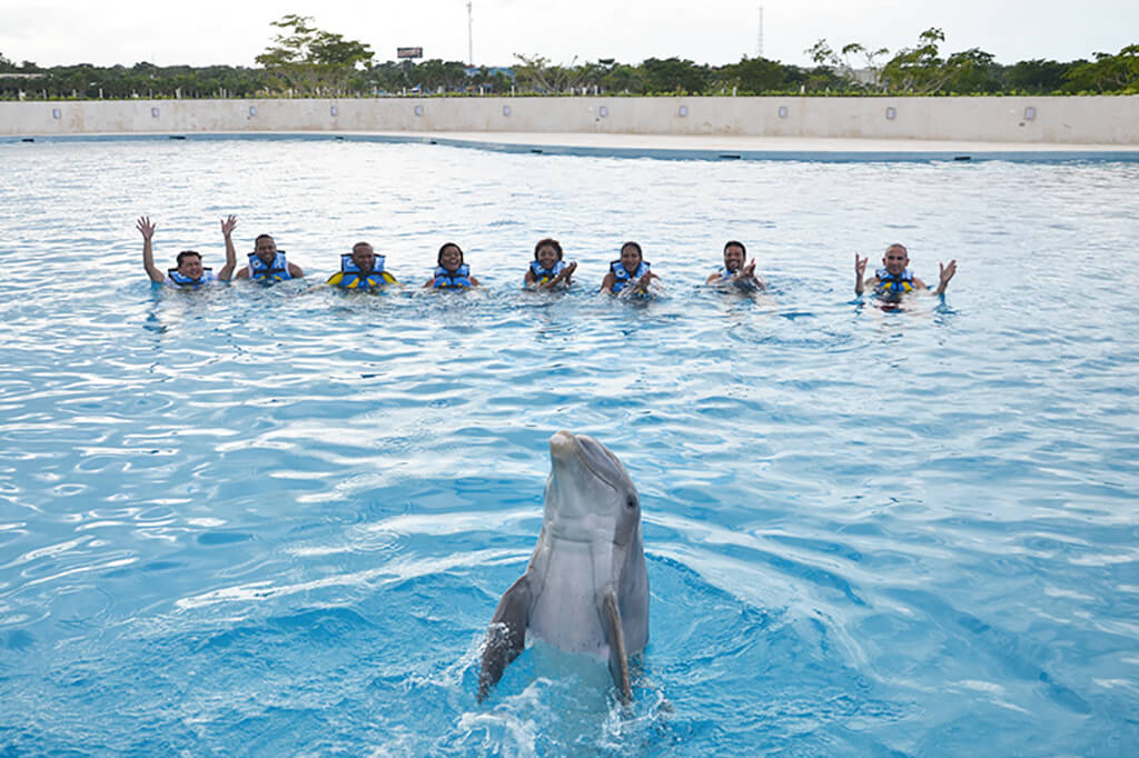 Dolphin Island Park Punta Cana, Swim with Dolphins in Punta Cana | Dolphin Discovery