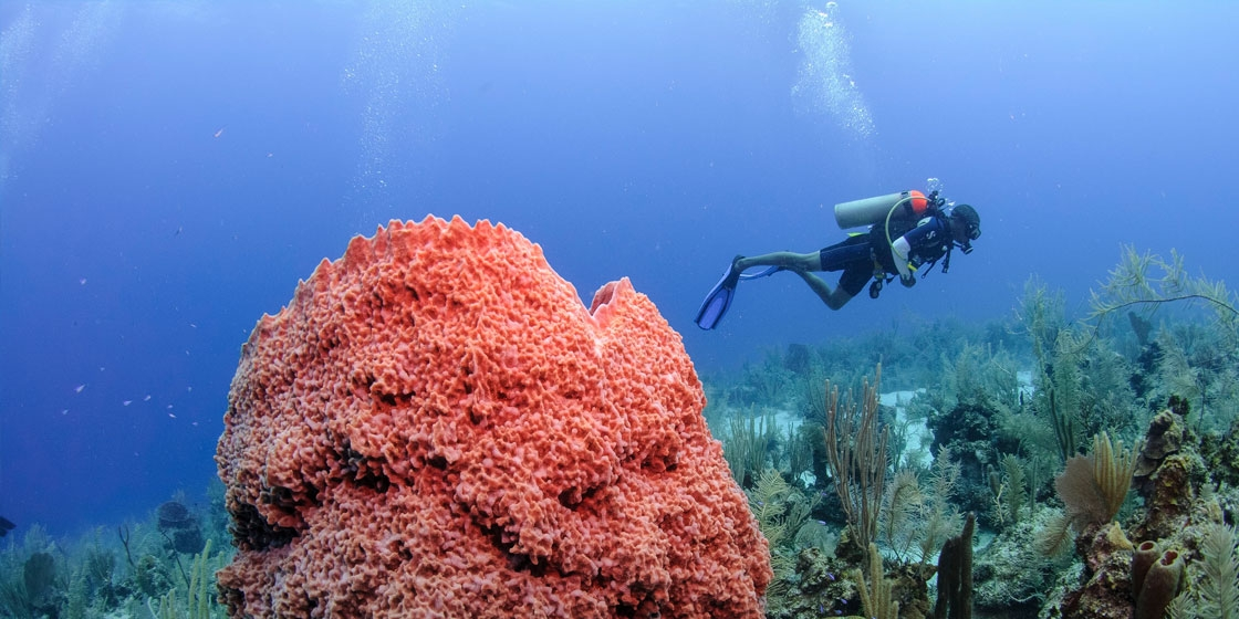 Emerald Forest Reef The Cayes and Atolls, Cruises | TravelBelize.org