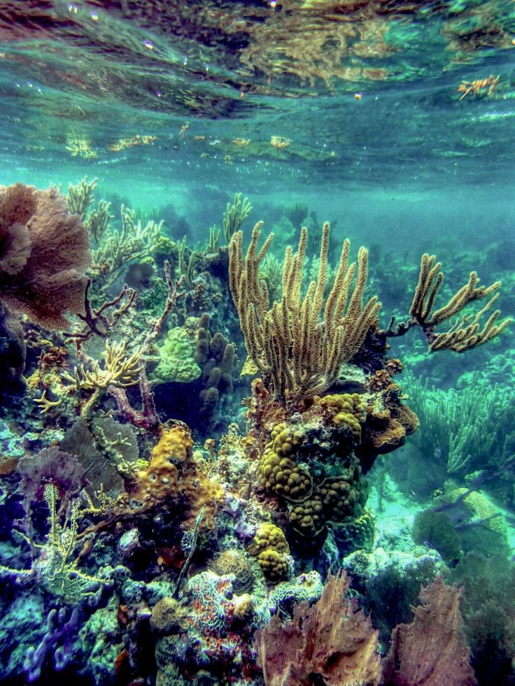 Emerald Forest Reef The Cayes and Atolls, 26 best Explore nature! images on Pinterest | Belize, Central ...