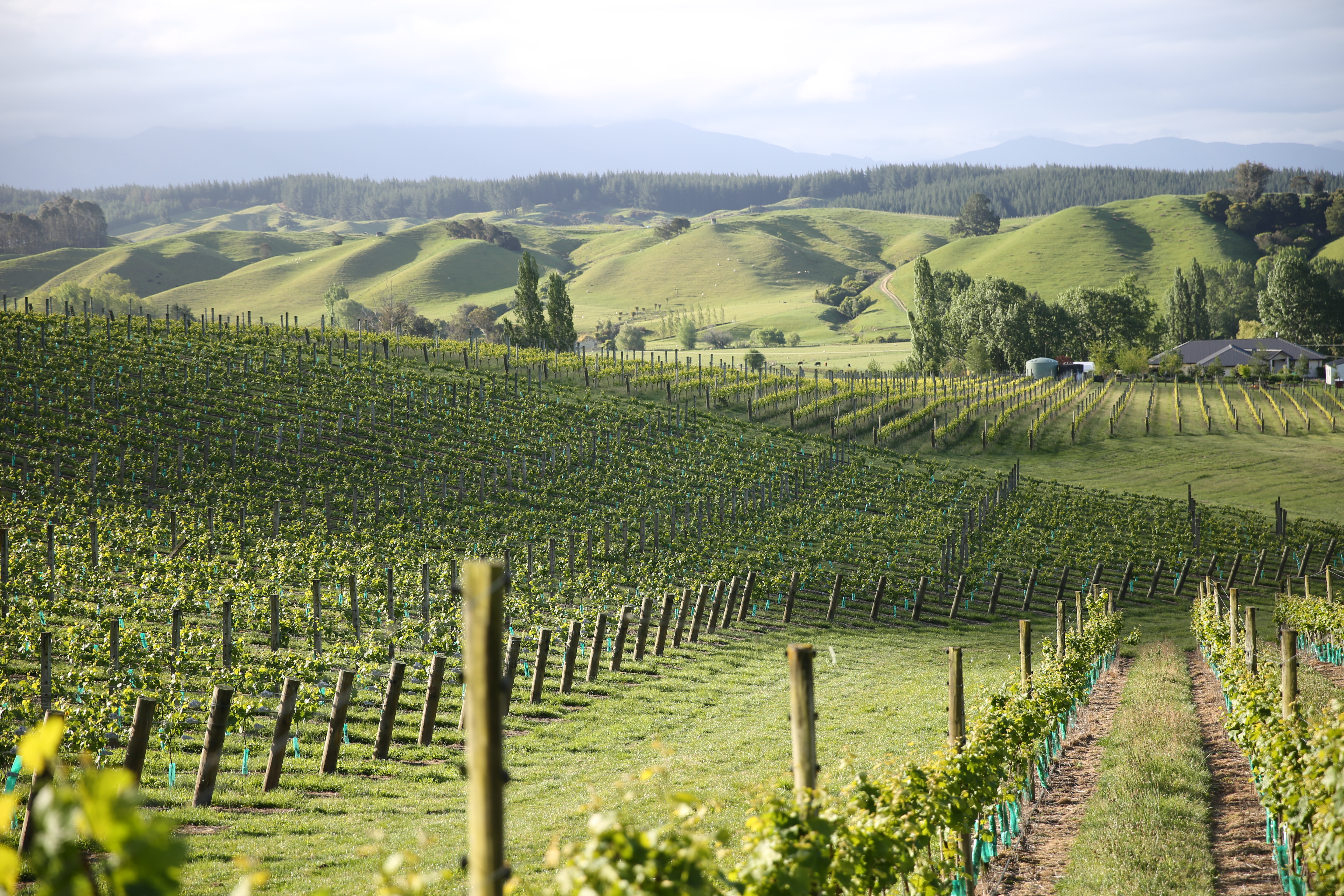 Esk Valley Estate Winery East Coast and the Volcanic Zone, Autumn discoveries in New Zealand's wine regions - Tourism New ...