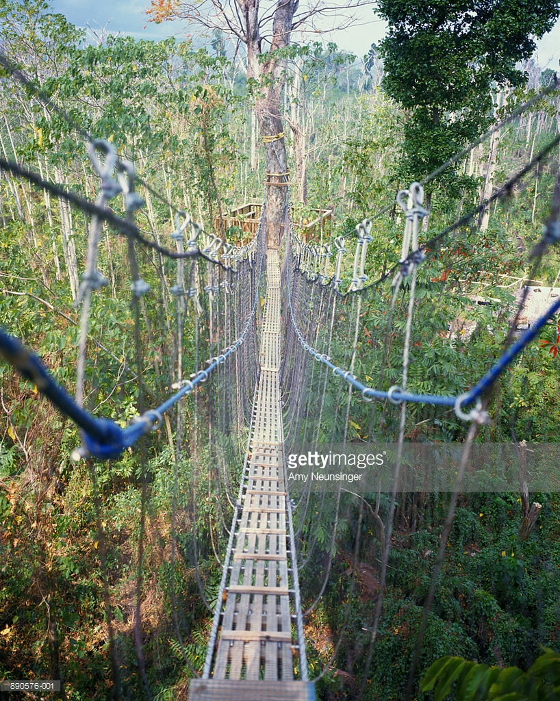 Falealupo Canopy Walk Northwestern Savai'i, Savaii Island Stock Photos and Pictures | Getty Images