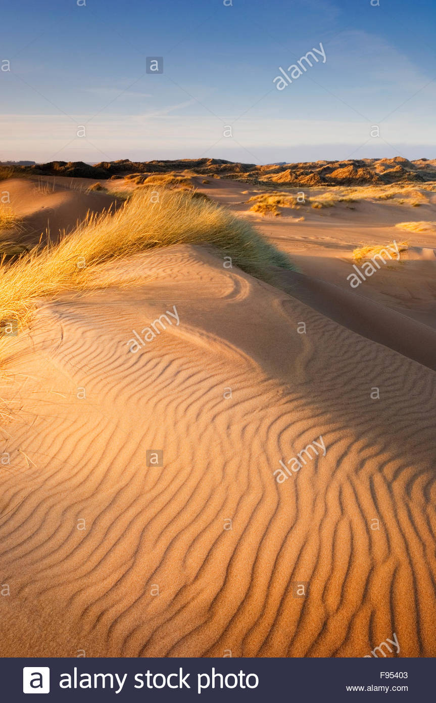Forvie National Nature Reserve Aberdeenshire, Sand dunes on Forvie National Nature Reserve in evening light ...