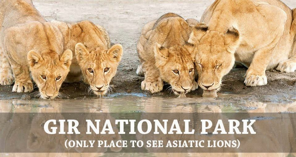 Gir National Park Gir National Park & Wildlife Sanctuary, Gir wildlife Sanctuary and National Park Gujarat