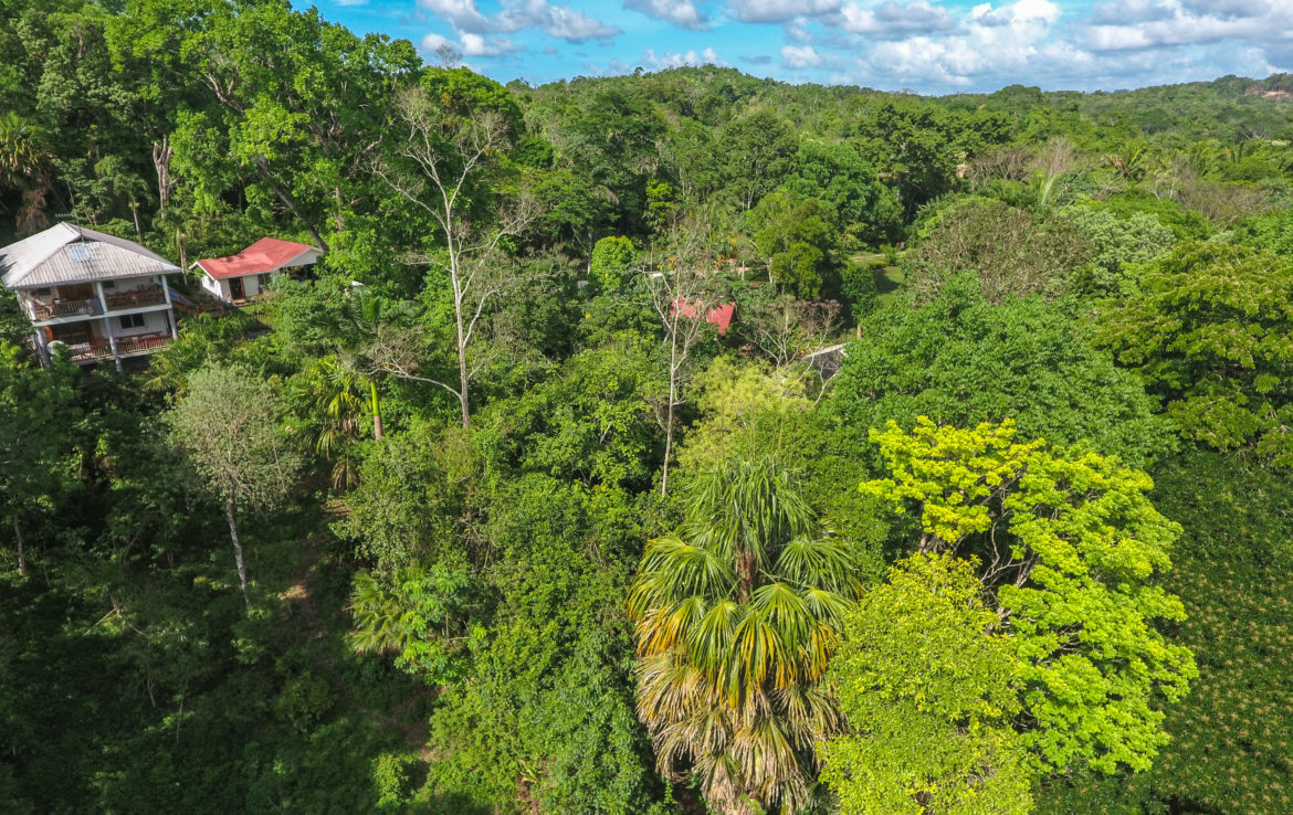 Green Hills Butterfly Ranch and Botanical Collections The Cayo District, A 50 Acre property with an active butterfly farm! – Ceiba Realty ...