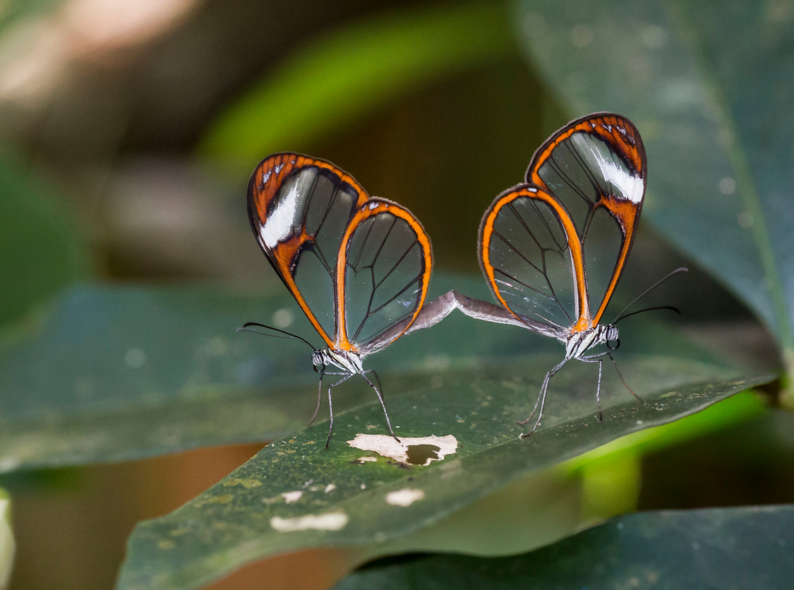 Green Hills Butterfly Ranch and Botanical Collections The Cayo District, Belize Adventure Tours - Comginations