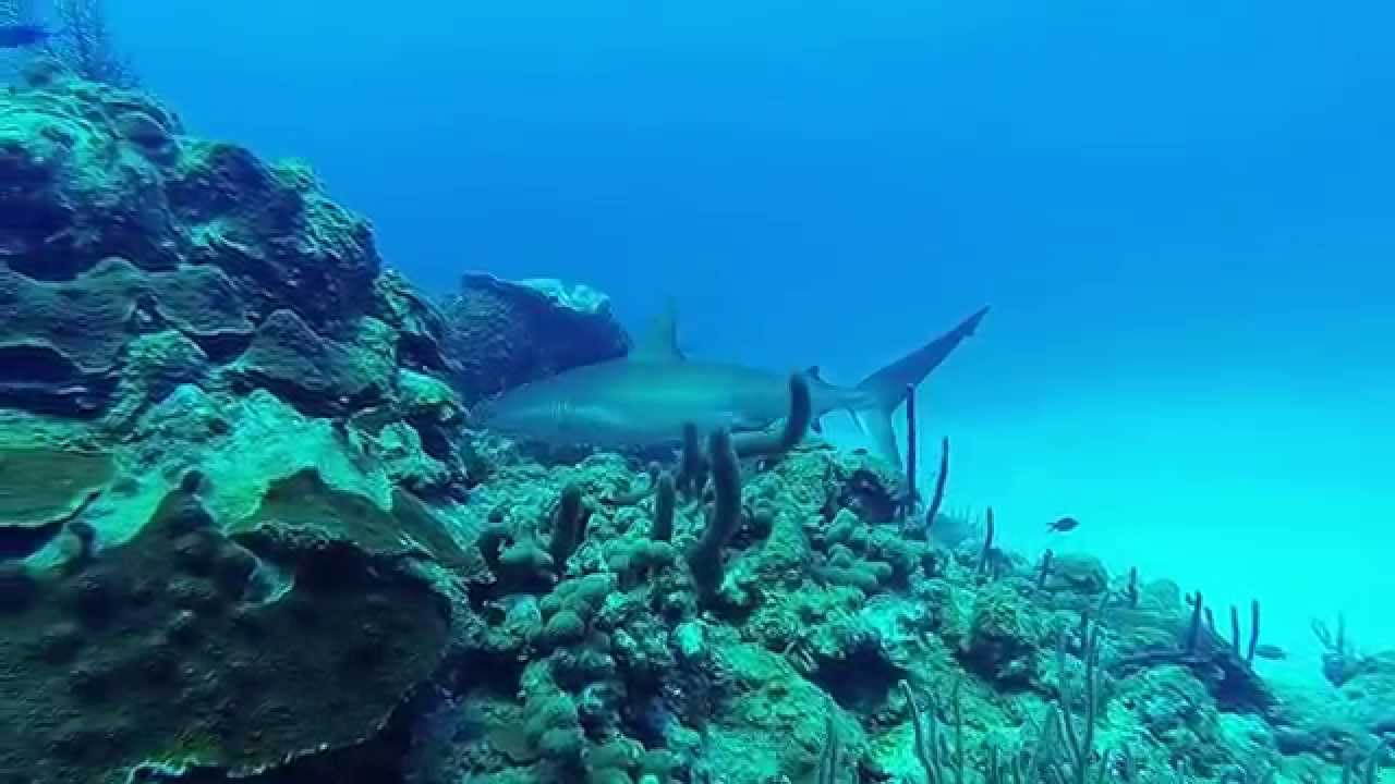 Half Moon Caye Wall The Cayes and Atolls, Half Moon Caye Wall - Lighthouse Reef - Belize 2014 - YouTube