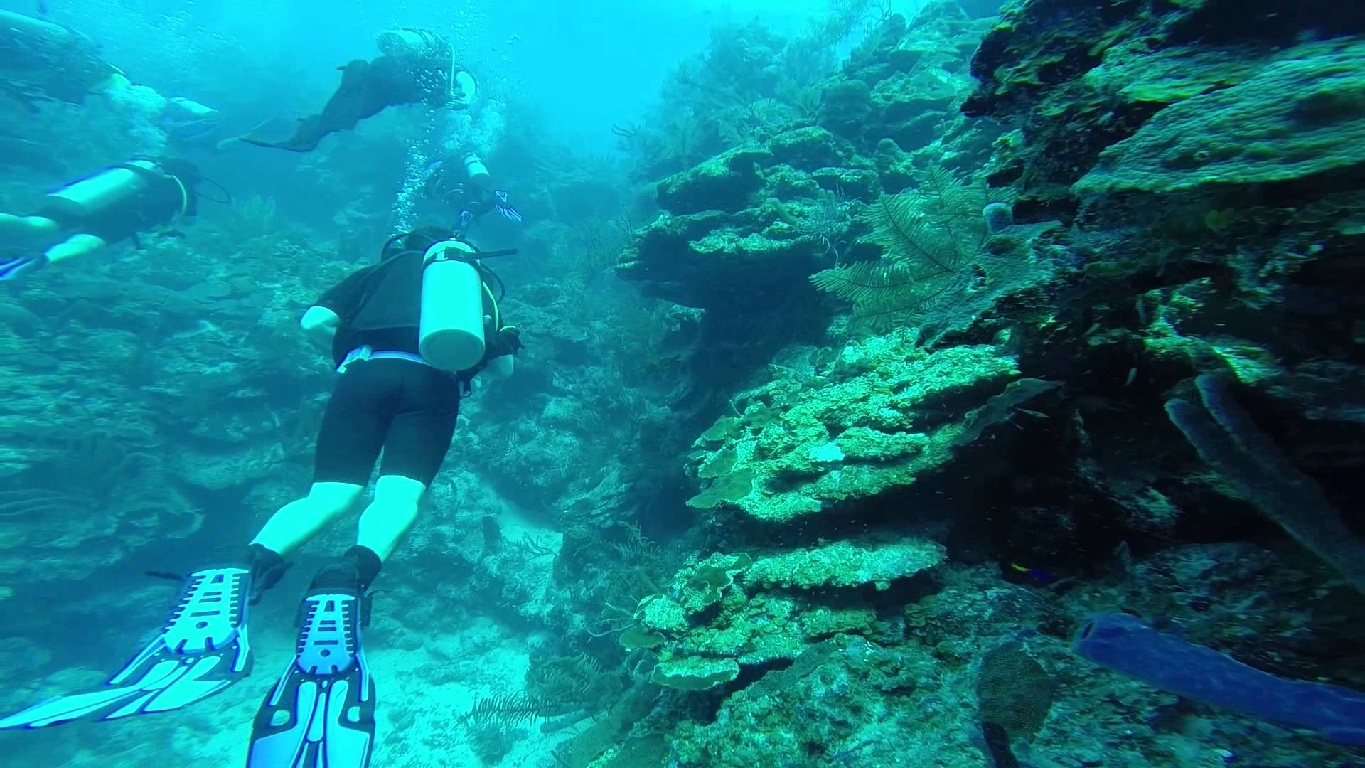 Half Moon Caye Wall The Cayes and Atolls, ITBEBOB. Blue Hole, Belize, Dive 2 Half Moon Caye Wall 1 GOPR0489 ...