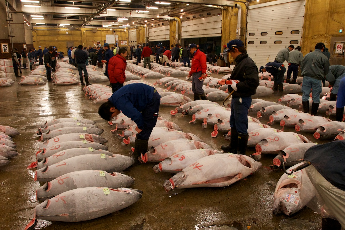 Hanzo-mon Tokyo, tsukiji market, the largest fish market in the world. You can ...
