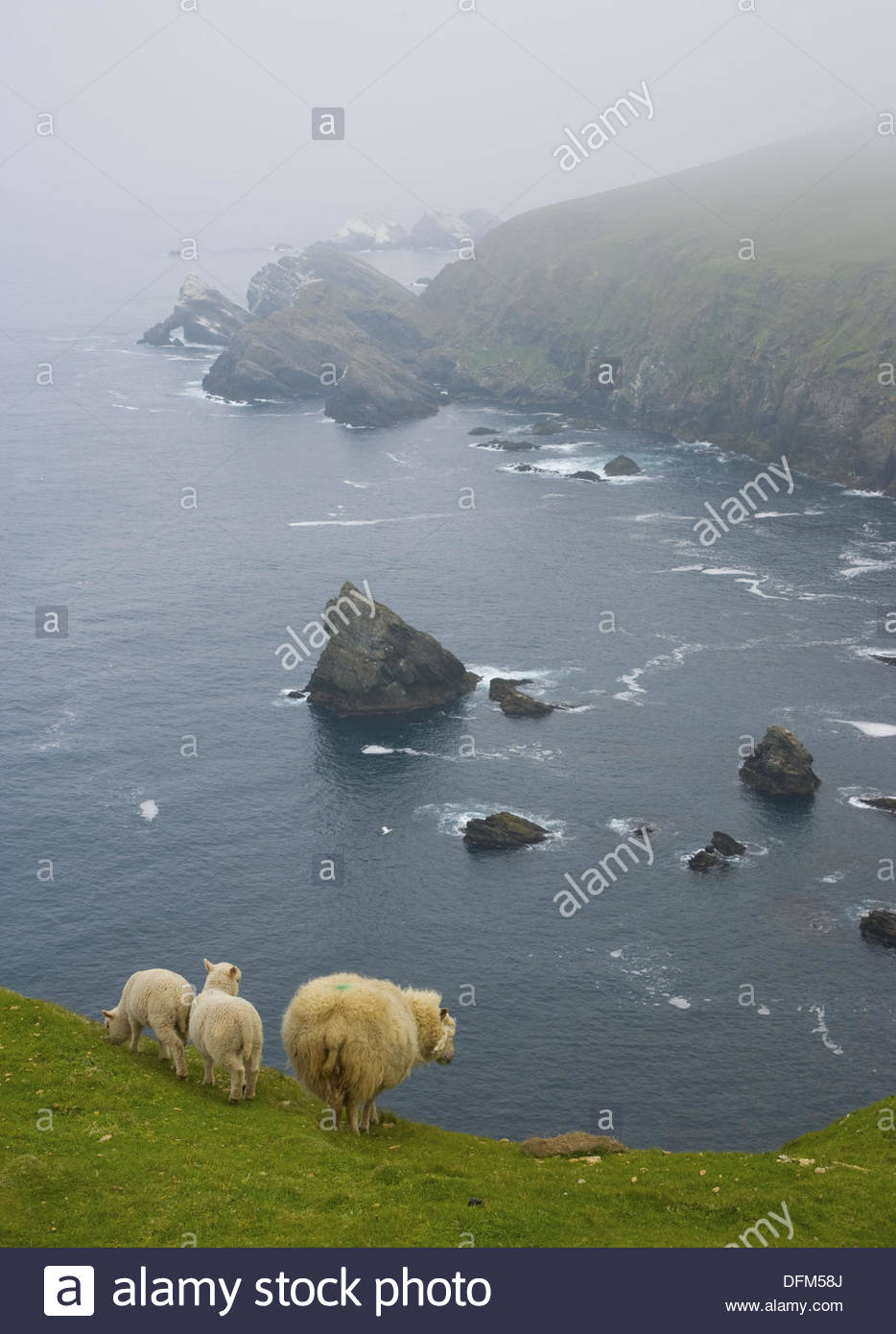 Hermaness Nature Reserve Unst, Cliffs of Hermaness National Nature Reserve. Unst Island, Shetland ...